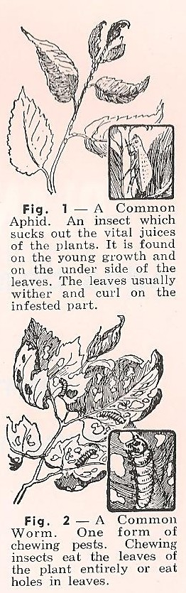 insectpests