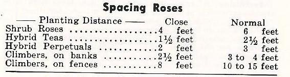 spacingroses