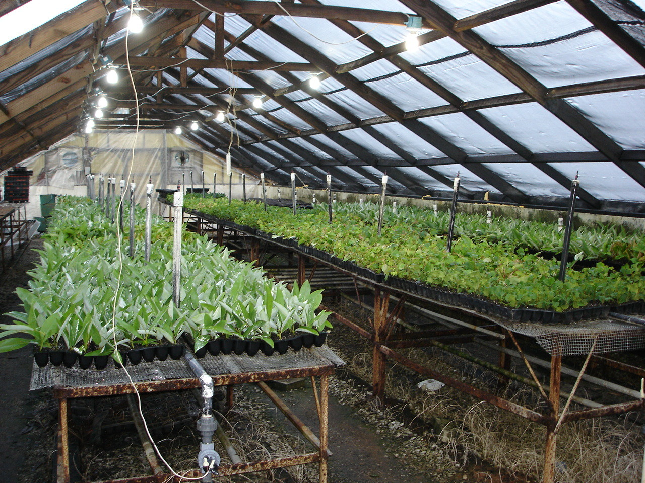 Boyd Nursery Greenhouse